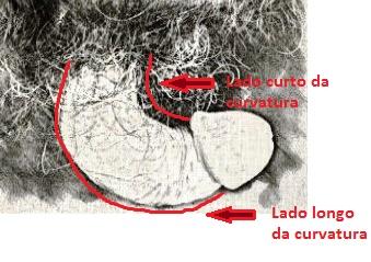 Desenho da curvatura de doença de Peyronie